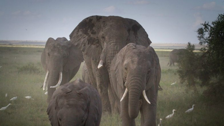 Construction Activities Affecting Natural Habitat of Elephants