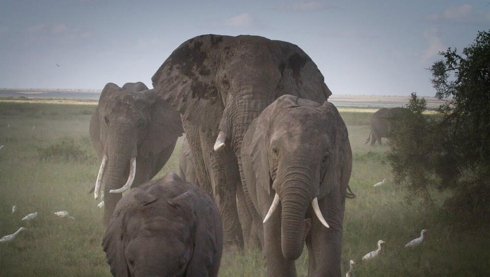 Uttarakhand High Court Bans Usage of Chilli Bombs to Drive Away Elephants