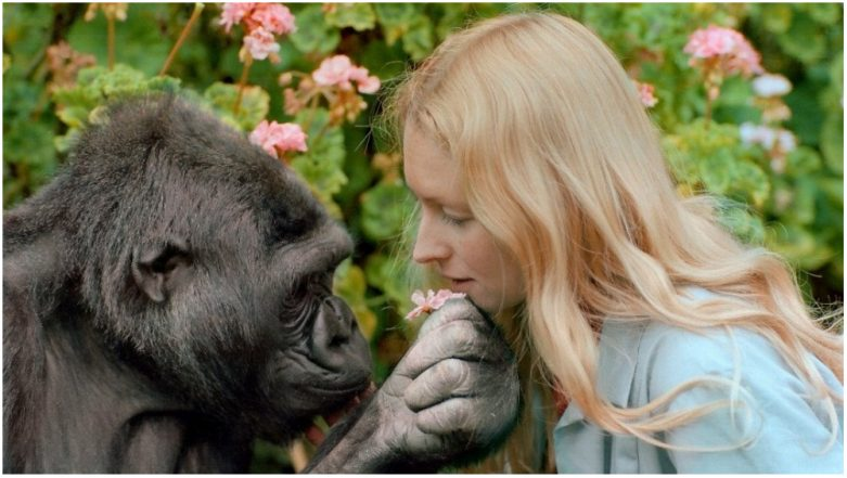 Koko, the Gorilla Who Used Sign Language & Loved Cats is Dead at 46