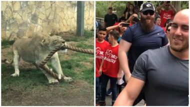 Three WWE Wrestlers vs Lion Cub Tug-of-War Video: Watch This Amazing Contest From San Antonio Zoo, Can You Guess The Winner?