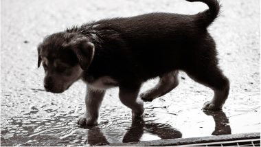 Monsoon Care Tips for Pets: Easy & Effective Ways To Keep Your Dogs & Cats Safe