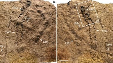 Earliest Known Animal Footprints Dating 541 Million Years Ago Found in China