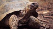 Maharashtra Man, Family Members Demand Tortoise With 21 Toenails, Black Labrador as Dowry from Girl's Family; Booked