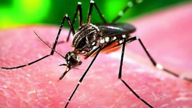 Rajasthan: Woman Tests Positive for Zika Virus in Jaipur