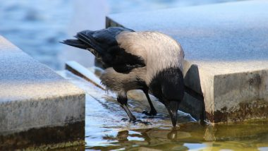Delhi Government Wants Adequate Drinking Water Arrangements for Birds, Animals This Summer Season