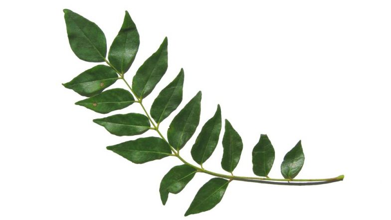 Curry Leaves for Hair and Skin: How Kadi Patta Can Cure Acne and Stop Hairfall (Watch Video)