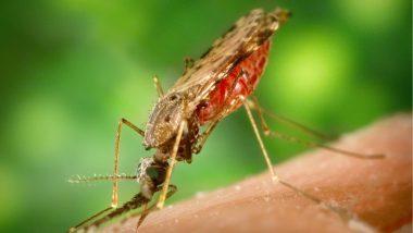 Malaria Kills Over 1,800 People in Burundi This Year, Says UN