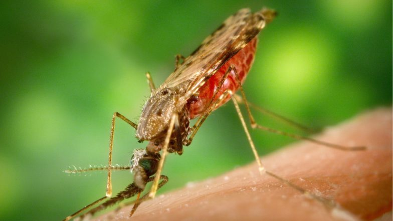 Dengue and Malaria Cases in Delhi: Vector-Borne Diseases on The Rise During Monsoons