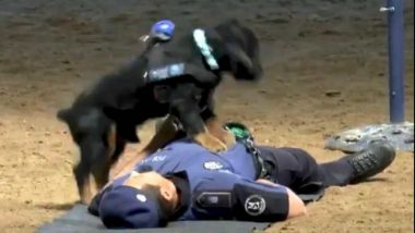 Police Dog Performing CPR on Officer During Training Exercise Goes Viral (Watch Video)