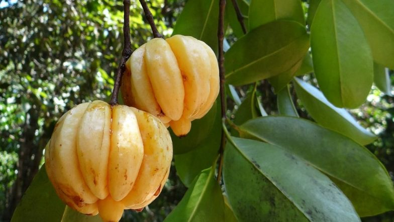 Garcinia Cambogia (Kudampuli): What Are The Other Health Benefits of This Weight Loss Fruit?
