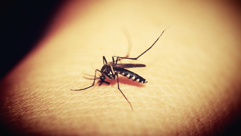Mosquito Eradication Technique May Make the Blood-Sucking Insects Buzz Off For Good