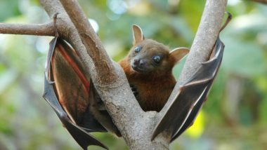 Nipah Virus: How Does the Infection Spread? What You Can Do to Prevent It