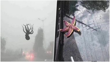 Starfish, Octopus & Other Marine Animals With Giant Hailstones Rain From China Sky! Watch Video of Powerful Storm
