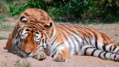 Wild Animals Are Changing Sleep Schedules in Order to Avoid Human Contact