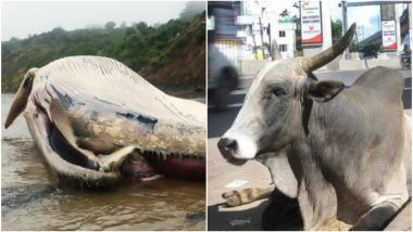 Thailand Whale Dies After Swallowing Plastic and Pune Bull Ingest 85 kgs of Non-biodegradable Waste! Can we Pledge to Beat Plastic Pollution