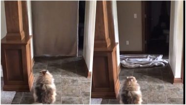 #WhatTheFluffChallenge Viral Videos: Dogs Are Adorably Freaking Out as Owners Play Peek-a-boo!
