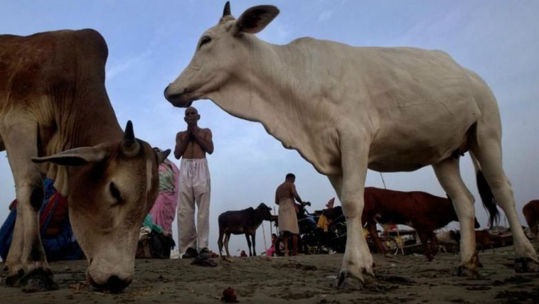 Cow Vigilantism Unacceptable, State Governments Should Prevent Such Incidents, Says Supreme Court