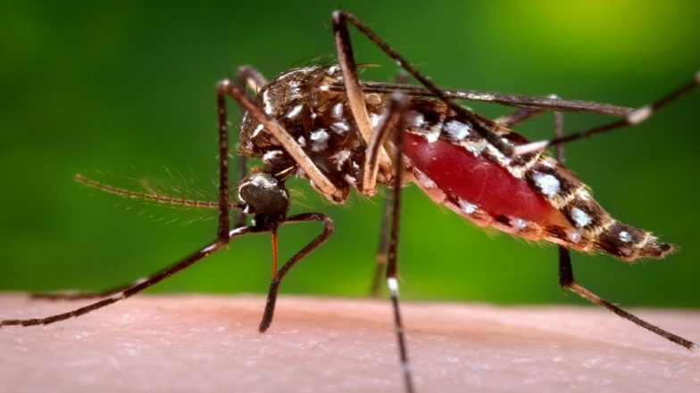 What is Dengue, and Why is it so Widespread This Year?