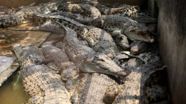 Furious Mob Butchered Nearly 300 Crocodiles in Indonesia to Avenge Local's Death