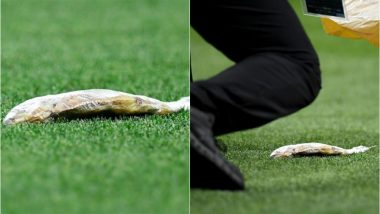 Dead Fish Thrown on the Pitch During Croatia Vs England FIFA World Cup Semi-Final Match, View Pics