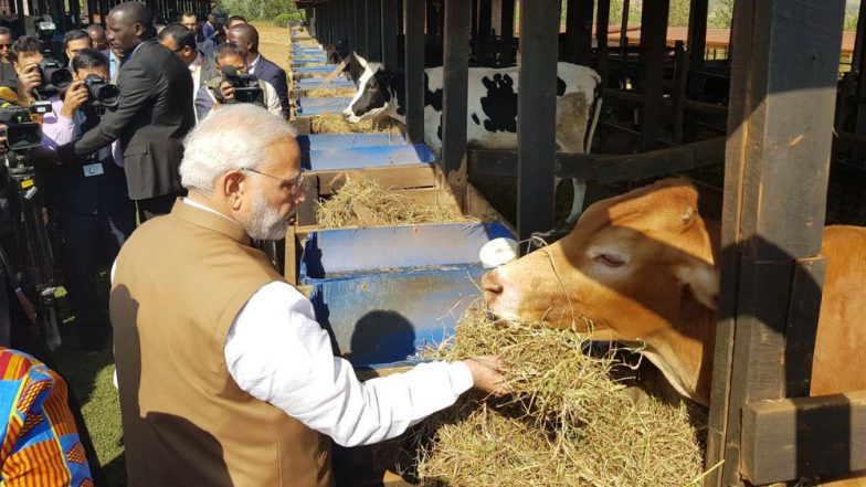 Narendra Modi Gifts 200 Cows to Rwanda in Rweru Model Village in Bugesera, See Pics