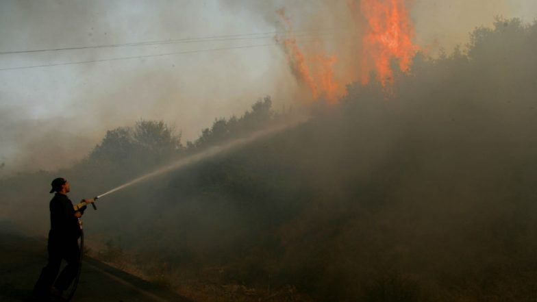 Climate Change Affects Ability of Forest to Regenerate After Wildfire: Study