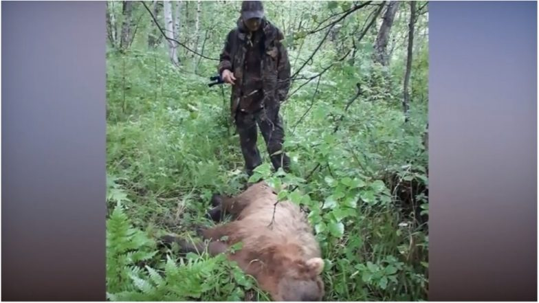 Brown Bears Eat 20 Corpses in a Cemetry in Russia, Including that of a Child: Watch Video