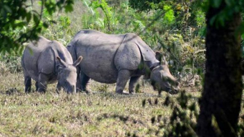 Seven Rhinos Die After Move to a New Park in Kenya