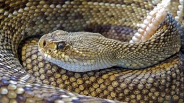 50 Snakes in One House Create Scare in UP's Fatehpur District