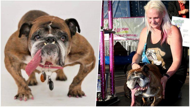Zsa Zsa, The English Bulldog who Won World's Ugliest Dog 2018 Title Dies at 9