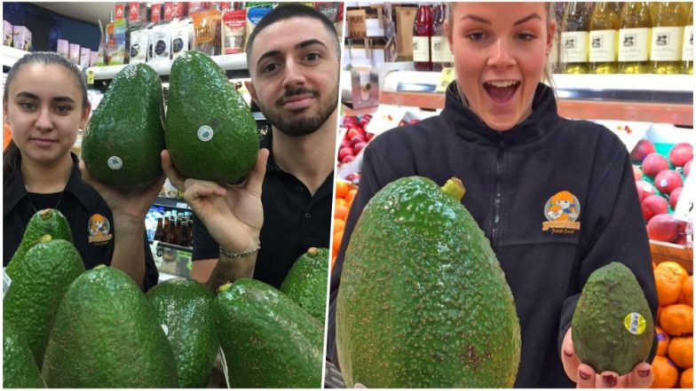 Giant Avocados Arrive in Australia's Supermarkets! Pics of Avozilla- the Biggest One Can Buy