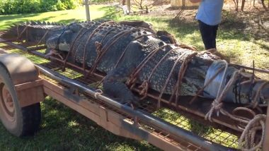 Rangers Finally Capture Giant Crocodile Weighing 600kg After 10-Year-Long Hunt in Australia (Watch Video)