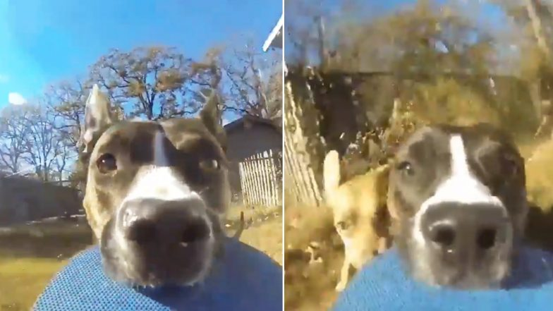 Dog Runs Away With a GoPro and The Footage is Going Viral, Watch Video