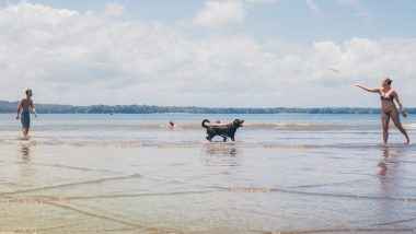 Is Taking Your Dog to the Beach Safe? Florida Pet Labrador Died of Saltwater Poisoning, Know All About This Deadly Condition