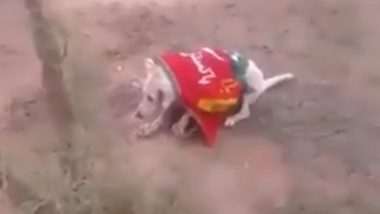 Dog in Pakistan Wrapped in PTI Flag, Shot Dead; Ghastly Video Going Viral