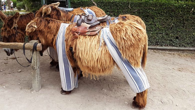 Donkeys Wearing Fashionable Pants Are a New Trend? Watch Pics!