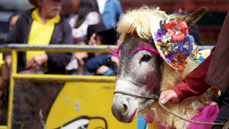 Donkey Dressed as Farmgirl Wins at a Annual Donkey Contest in Columbia