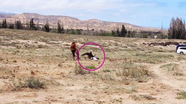 Golden Eagle Swooped on 8-Year-Old Girl During Falconry Display in Kyrgyzstan, Watch Shocking Video!