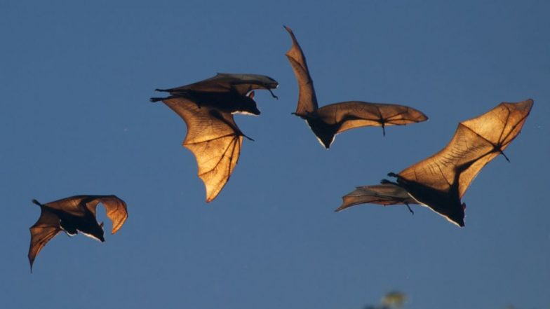 Nipah Virus 'Reservoir' Detected in Cooch Behar in West Bengal and Dhubri in Assam