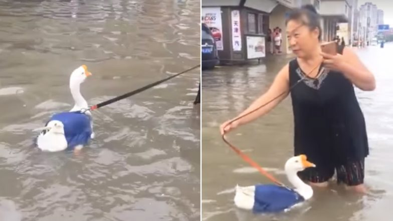 Woman in China Takes Her Goose Out For a Walk in Flooded Streets, Watch The Funny Video