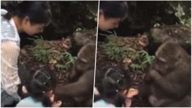 Monkey Punches Innocent Little Girl in Face at a Zoo in China; Watch the Viral Video
