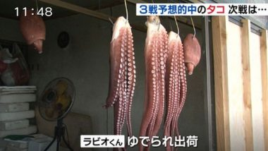Rabiot, the 'psychic' octopus, who correctly predicted every result of Japan's World Cup group matches is chopped and eaten