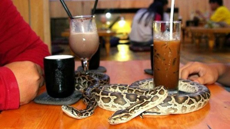 This Cafe in Tokyo Allows You to Sip Coffee With Snakes, View Pics!
