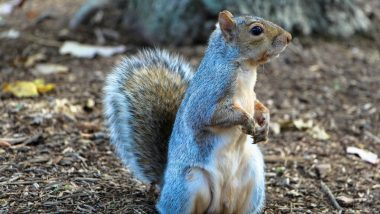 Bubonic Plague: Squirrel Tests Positive for Plague in US