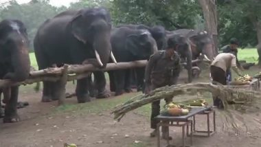 Elephants Picnic Video: 7-Day Picnic For Tuskers to Enjoy Family Time at MP's Kanha National Park