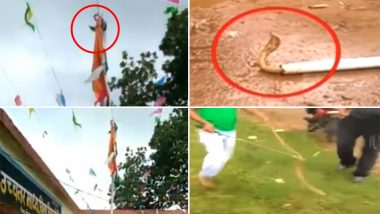 When Nag Panchami and Independence Day Falls on Same Day! Cobras Found on Flag Poles,Watch Videos