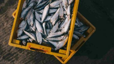 Tripura Fish Supply Hit Hard as Bangladesh-imports Stalled