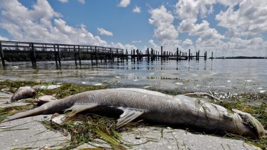 Florida Declares Emergency For Worst Red Tide: Know All About Deadly Algal Bloom Affecting Gulf Coast