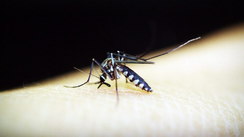 World's Deadliest Killer: Mosquitoes Are Biggest Cause of Human Deaths Around the World!