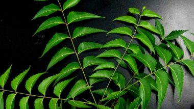 Five Amazing Healing Benefits of Neem to Beat Your Monsoon Woes